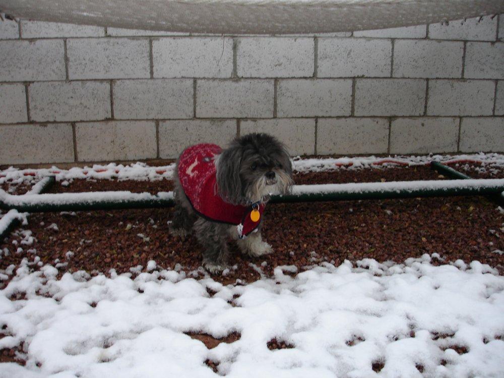 Snowstorm - December 2006