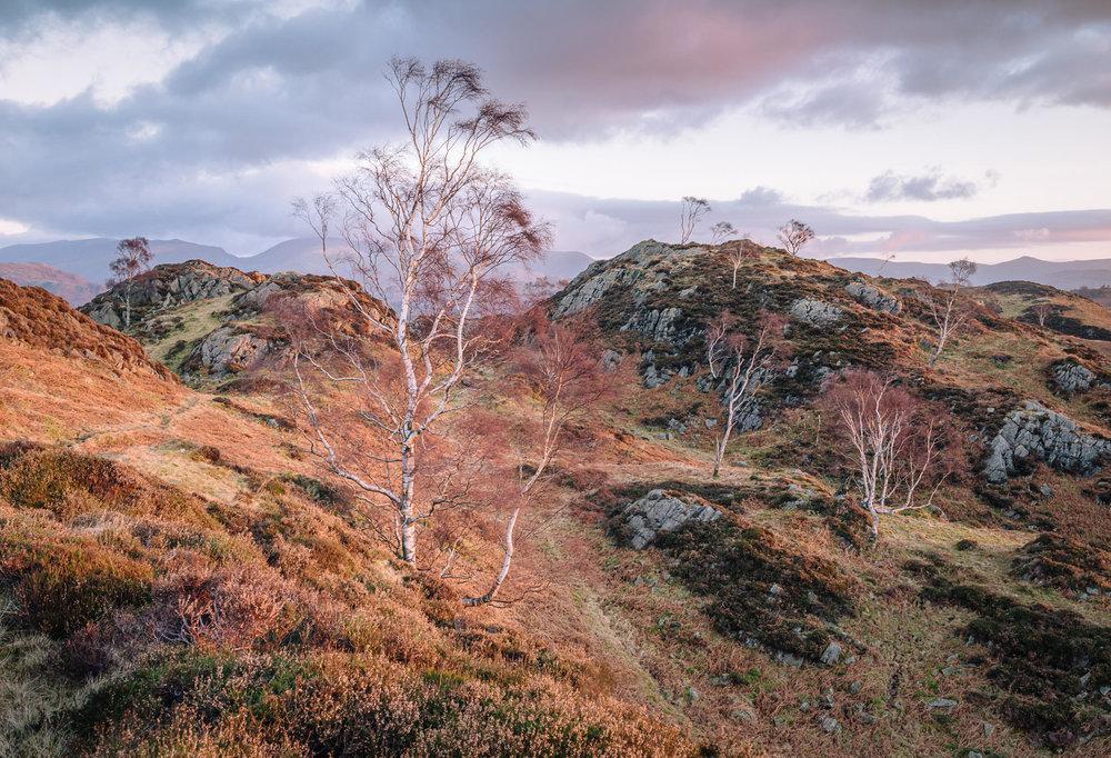 First Light, Winter - Holme Fell