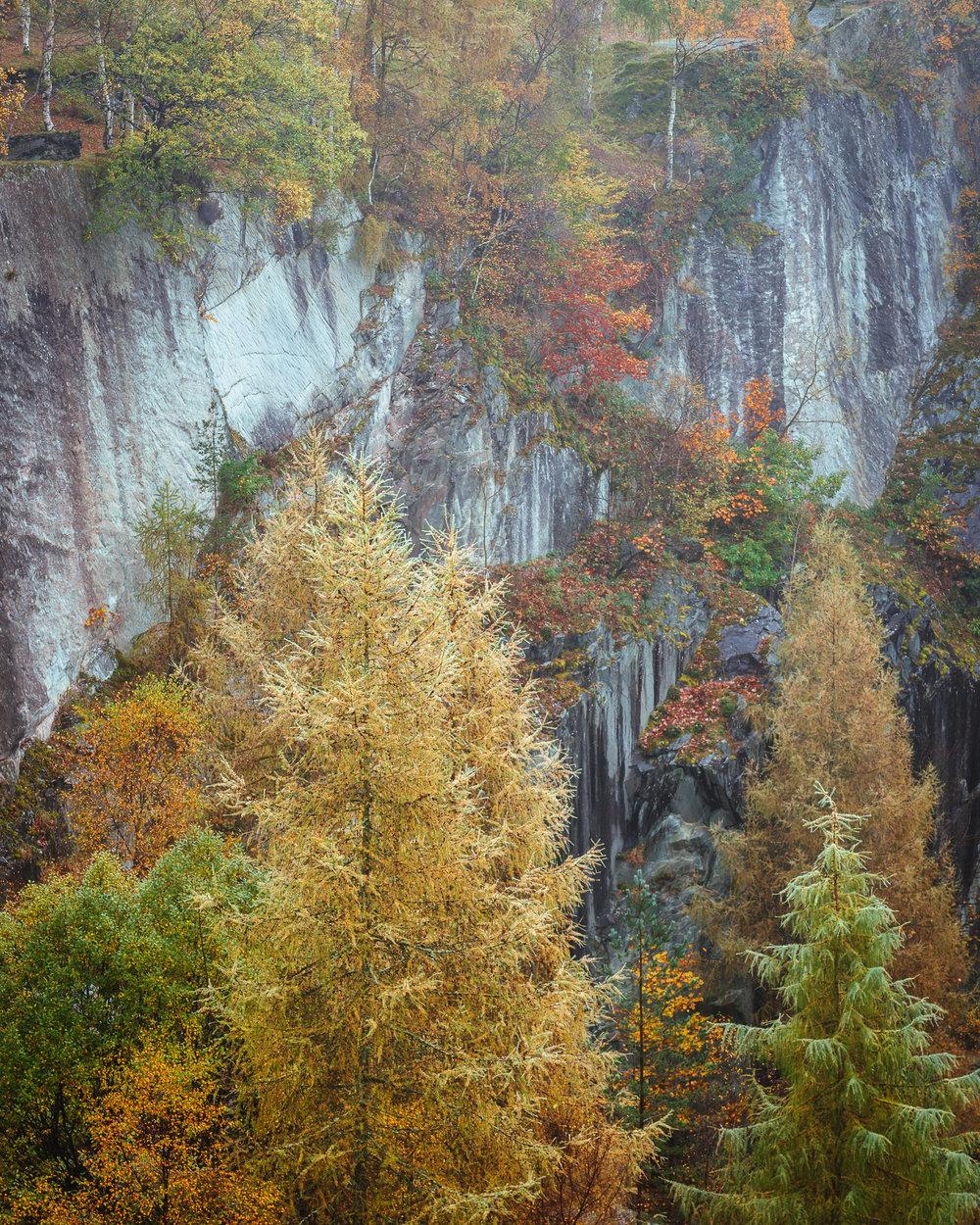The Rock Garden - Hodge Close