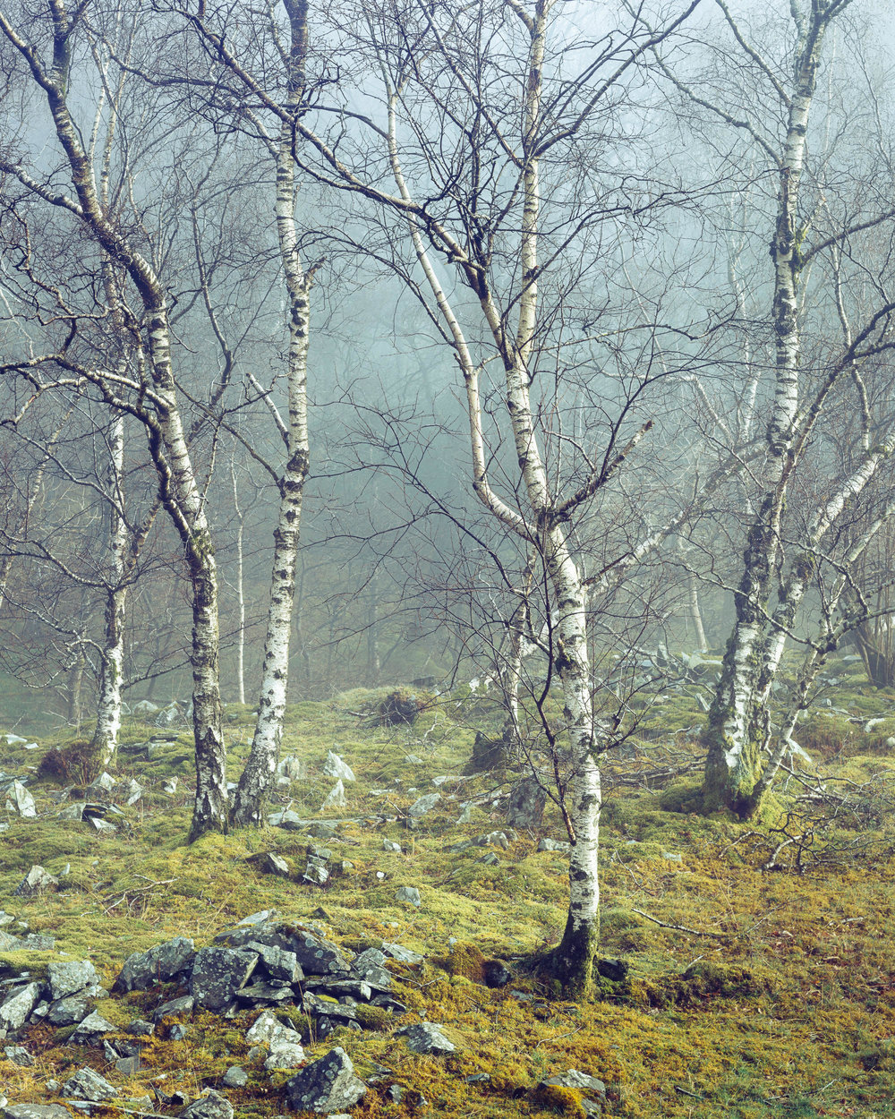 Scenes from the Wasteland - Moss Rigg