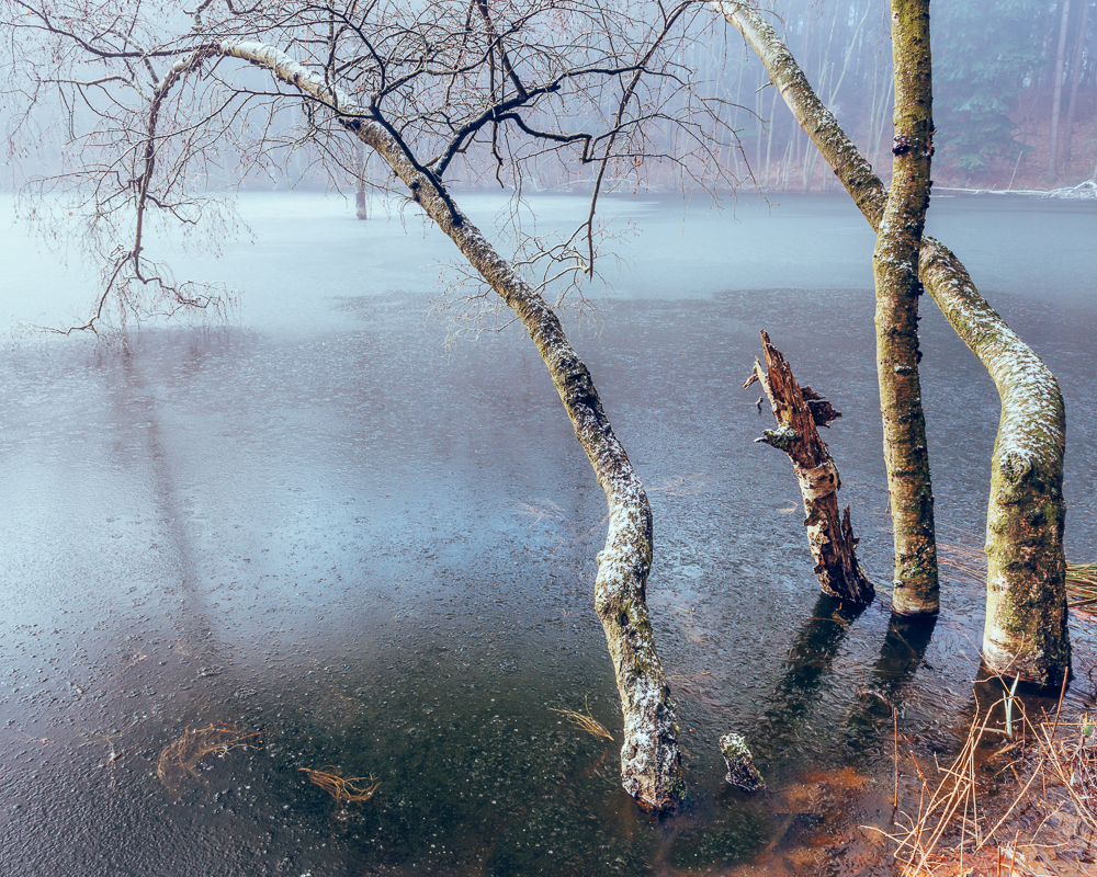 Dead Lake, Delamere