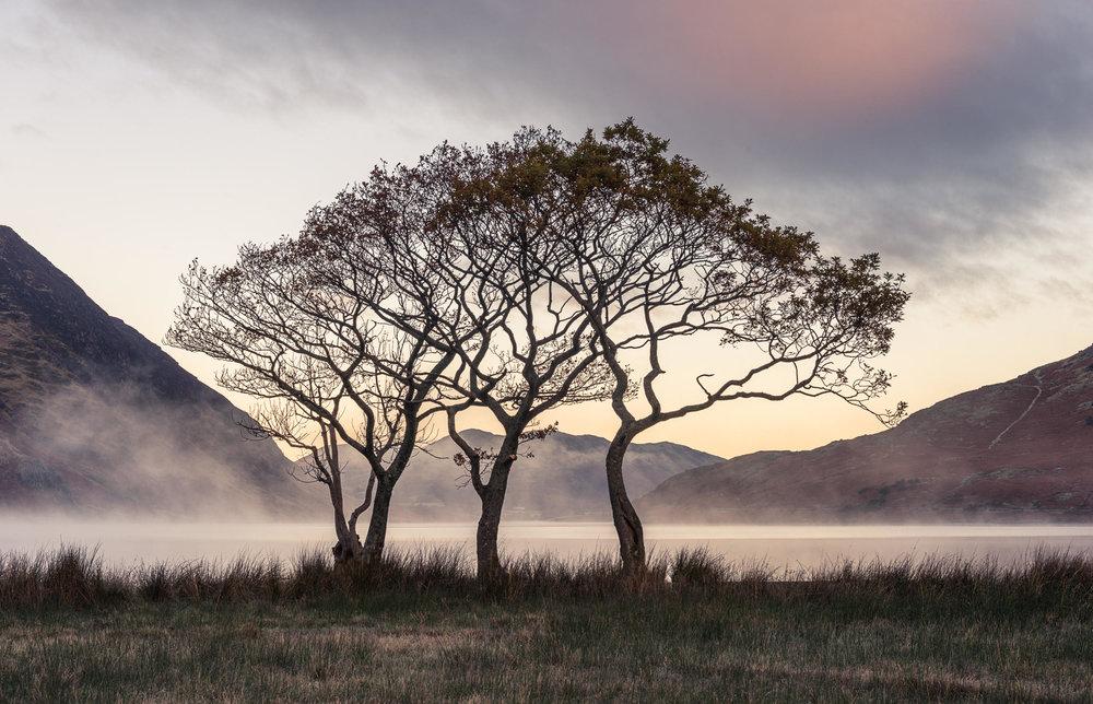 crummock-trees-l.jpg
