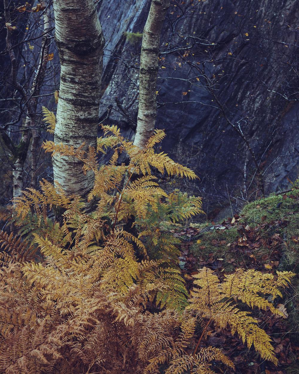 Hodge Close Autumn