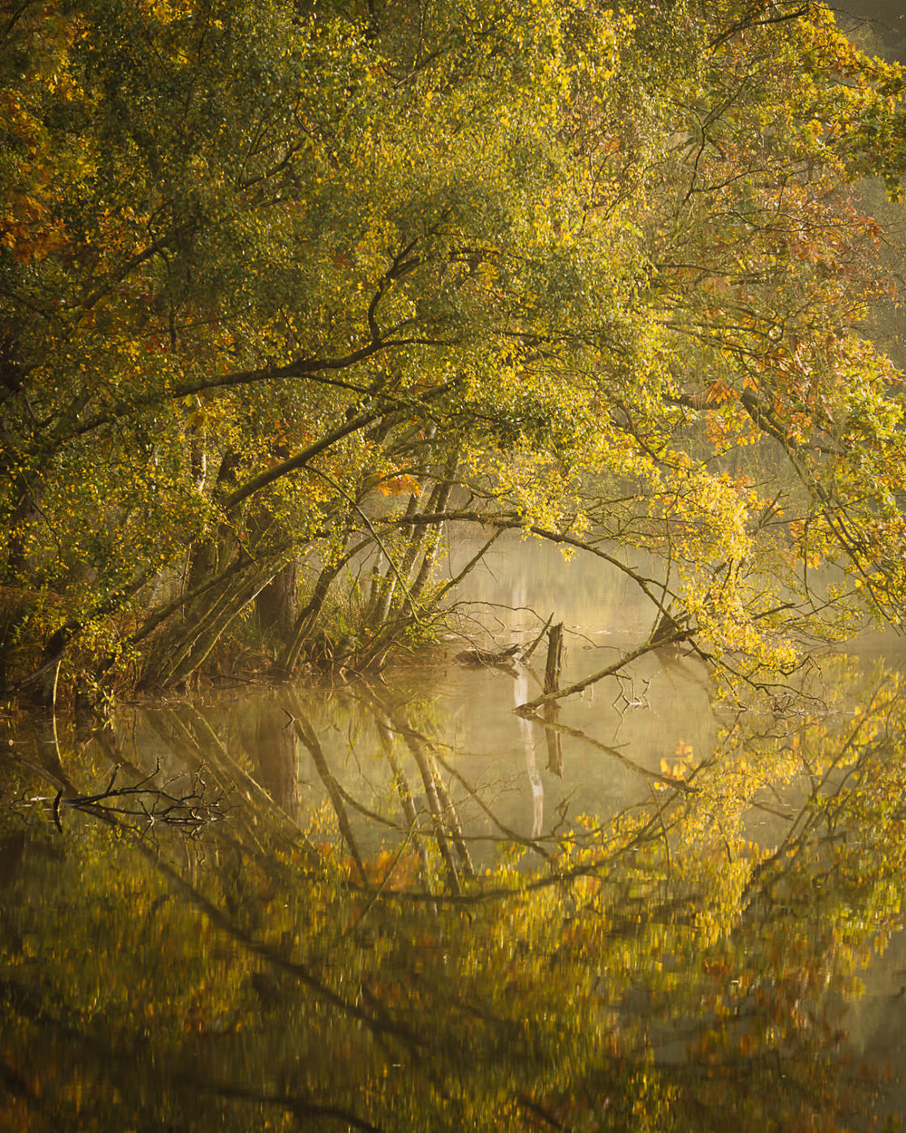 A Touch of Autumn - Dead Lake, Delamere