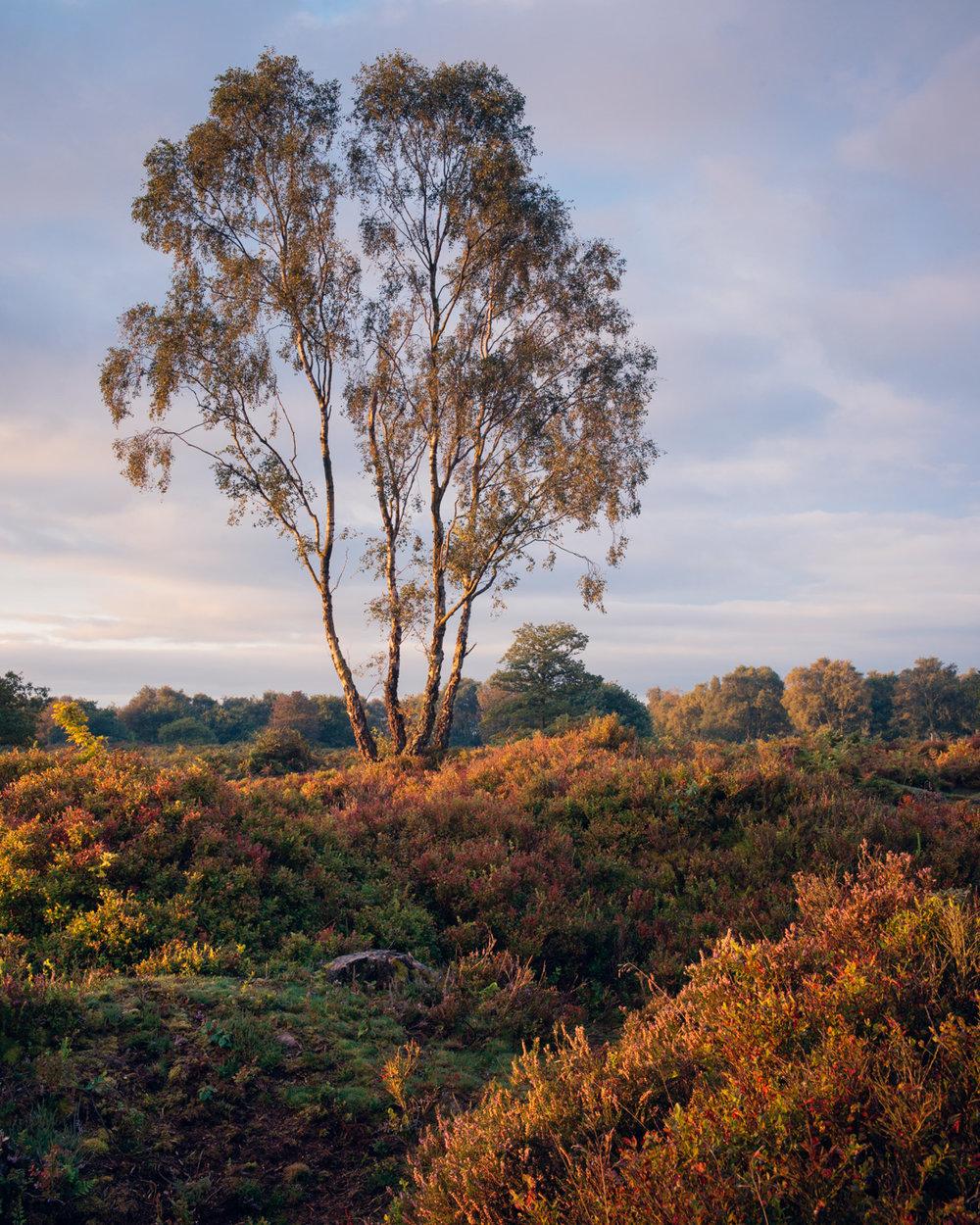Morning Light, Bickerton