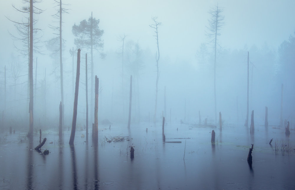 Delamere - Birchenholt South Moss