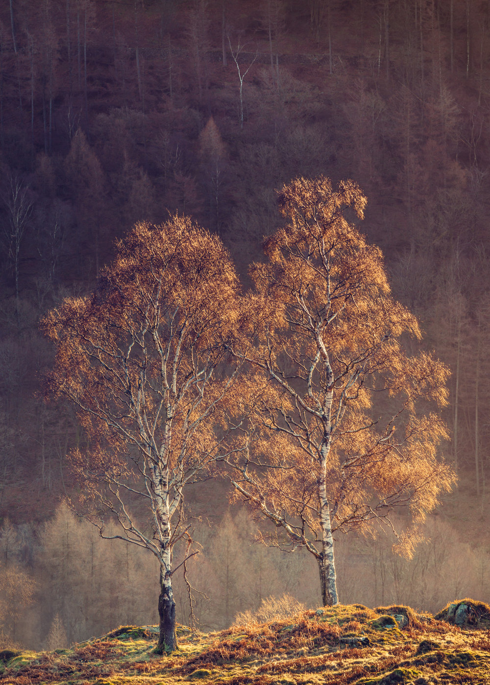 Companions - Holme Fell