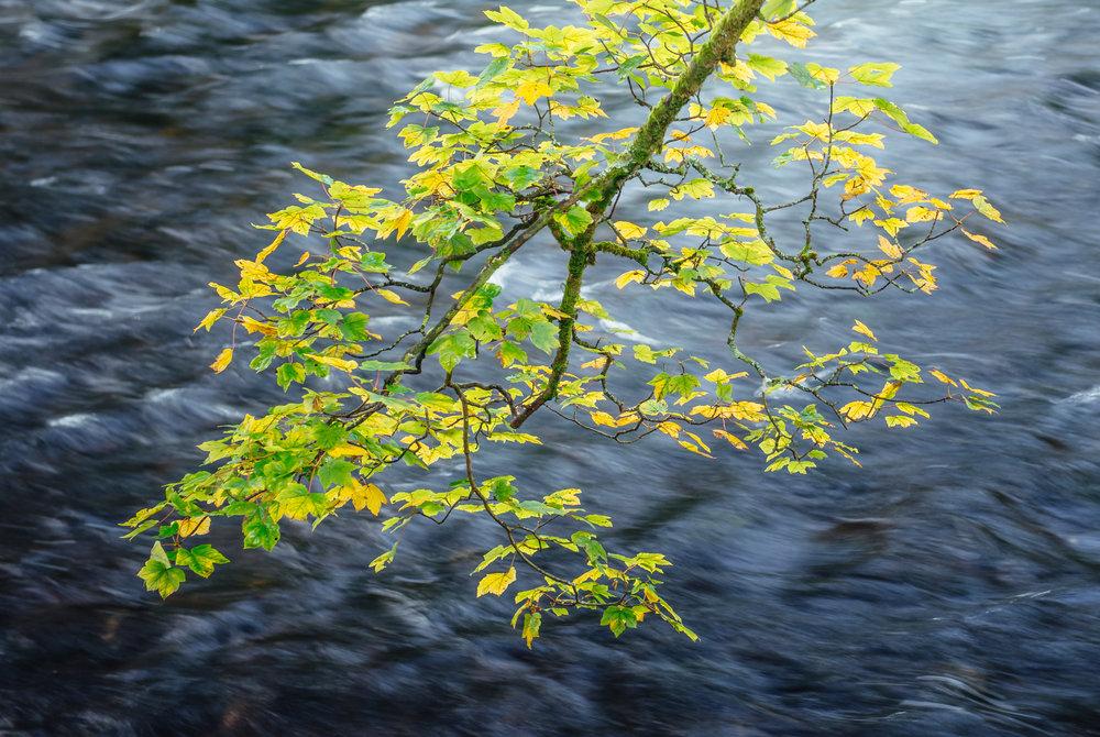 River Brathay Citrus