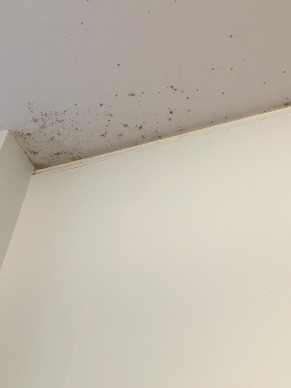 Since the beginning of the semester, multiple complaints have been filed about mold in undergraduate residence halls.  Photo courtesy of an anonymous resident.