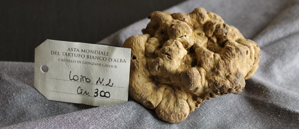 truffle 3.PNG