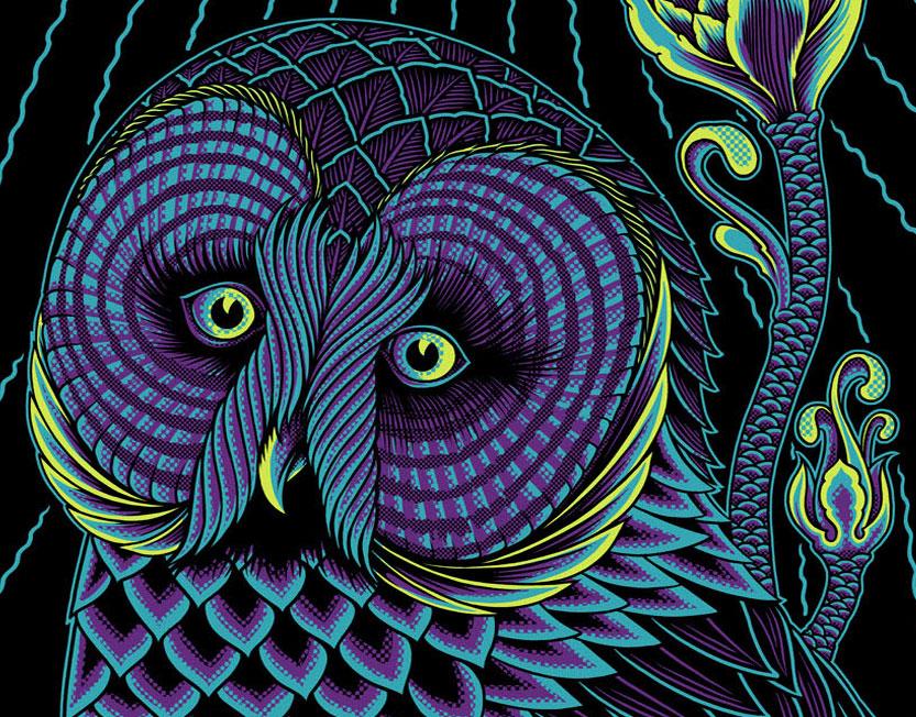 owl - 8