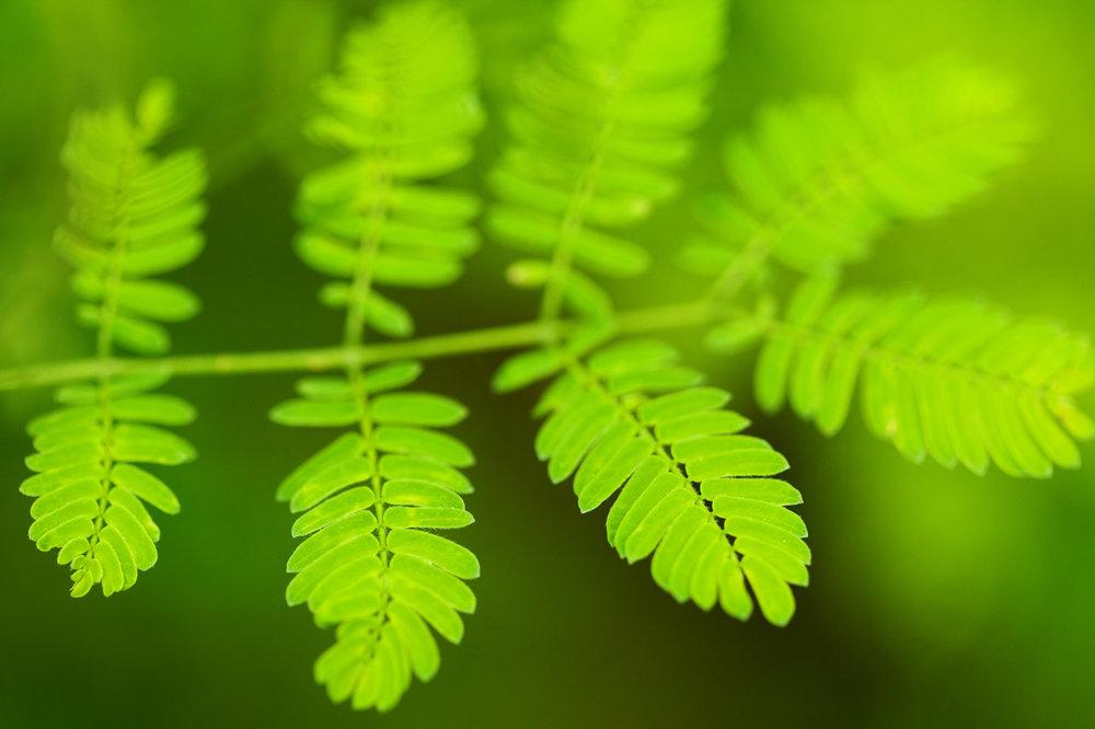 fresh-green-leaf.jpg