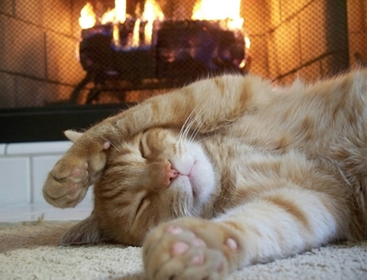 sleeping kitten by fireplace.jpg