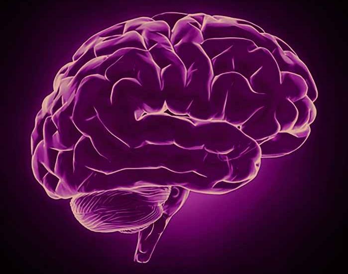 brain.web.jpg