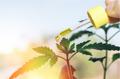 CBD Products from Marijuana - Recommended practices for selecting and using high CBD / low THC products from marijuana, either medical or recreational.