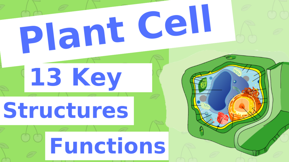 13 Key Structures and Functions of the Plant Cell