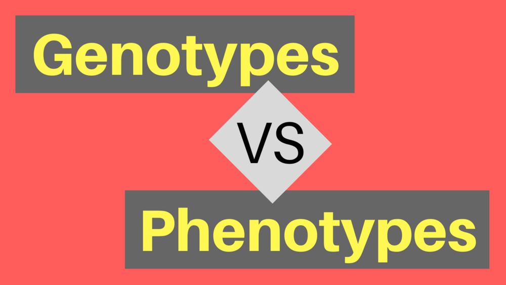 Genotypes vs Phenotypes