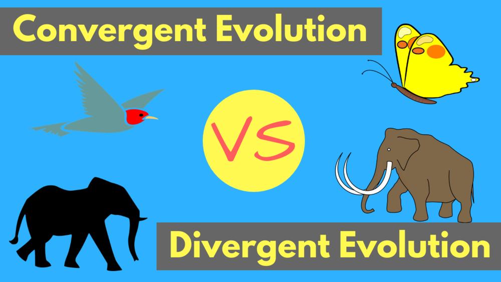 Convergent Evolution vs Divergent Evolution