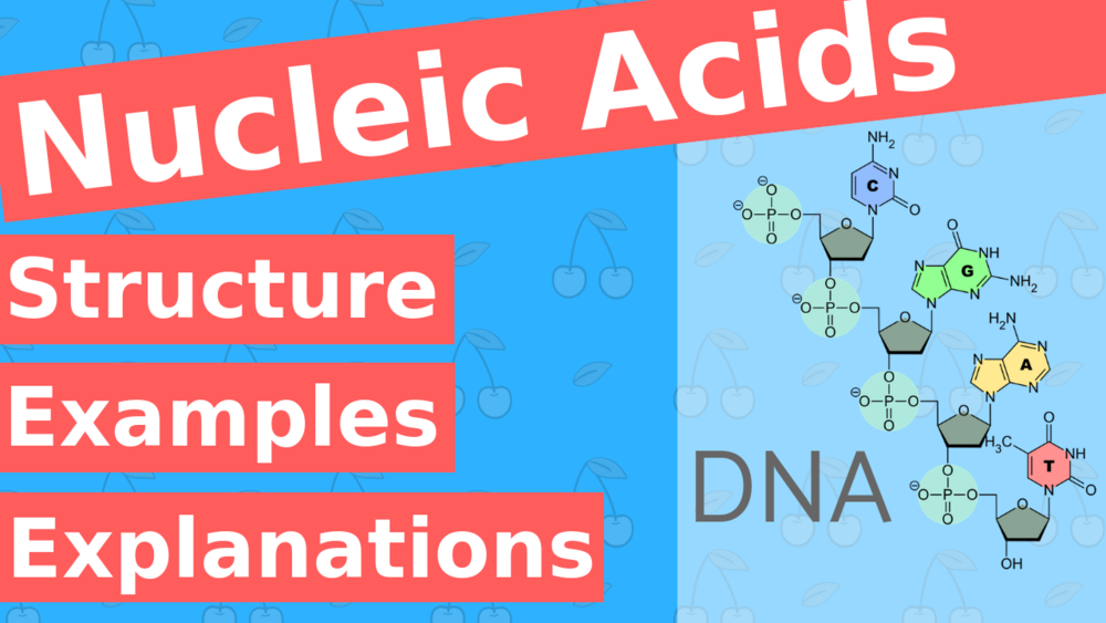 What are Nucleic Acids?