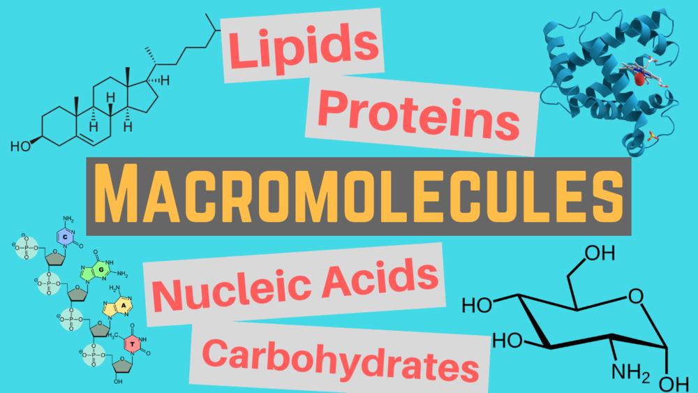 Macromolecule Classes and Functions