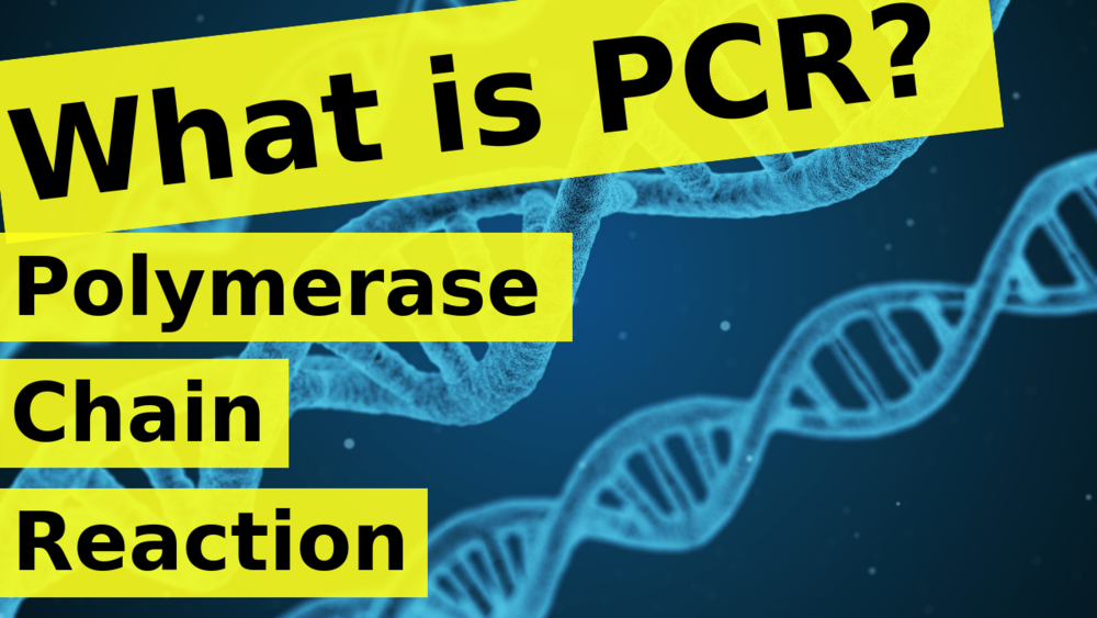 What is PCR | Polymerase Chain Reaction