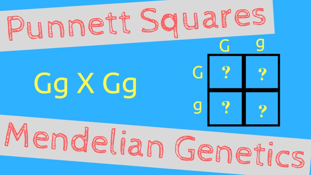 Punnet Square Basics