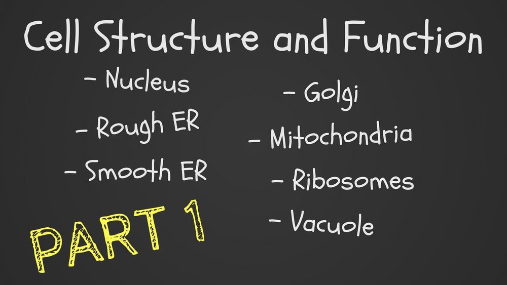 Cell Structure and Function Part 1