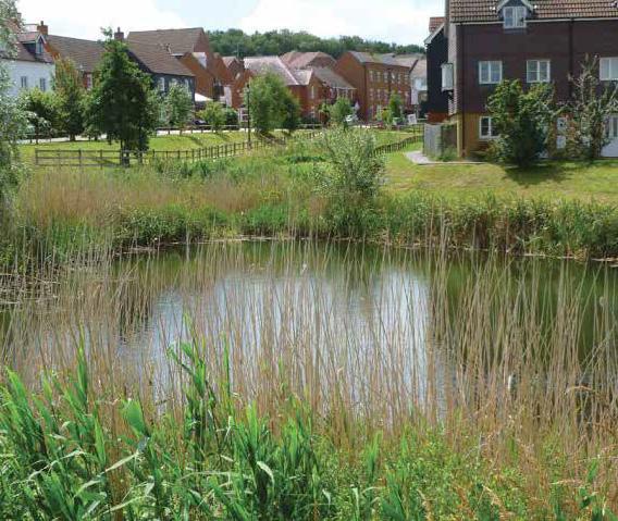Local Pond