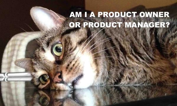 cat-crisis.jpg
