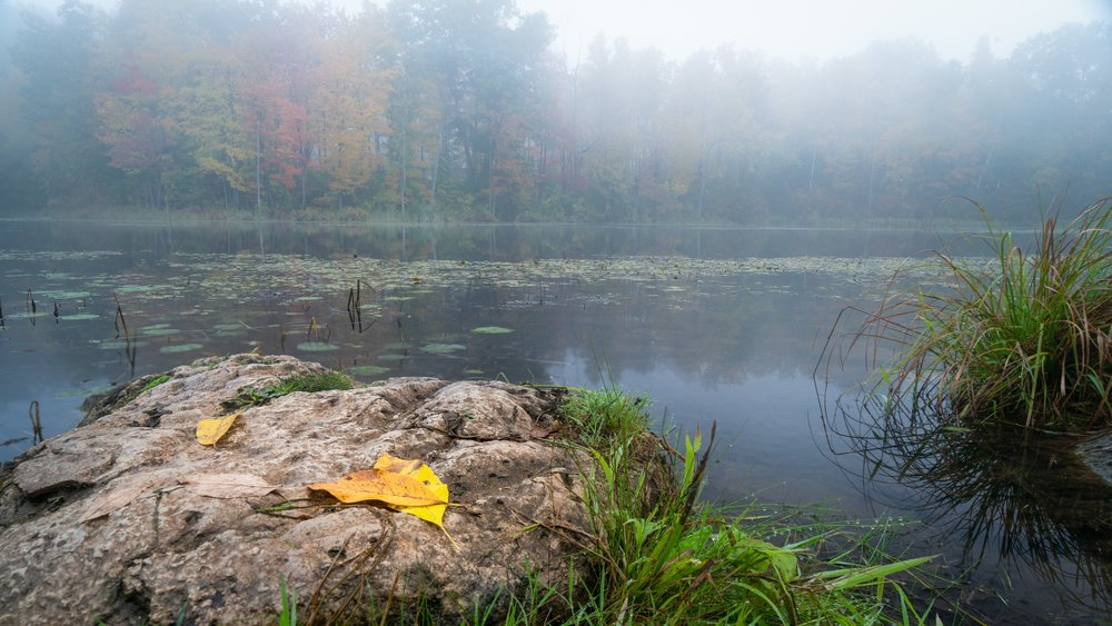 Fog on the pond