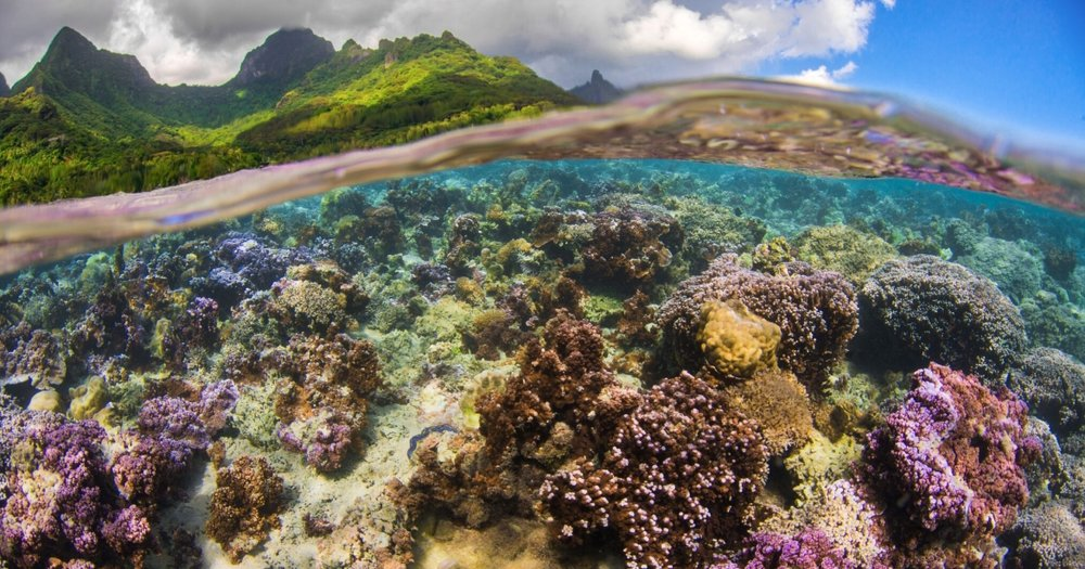 Mo'orea, Society Archipelago, French Polynesia. Photo  ©  Lauric Thiault