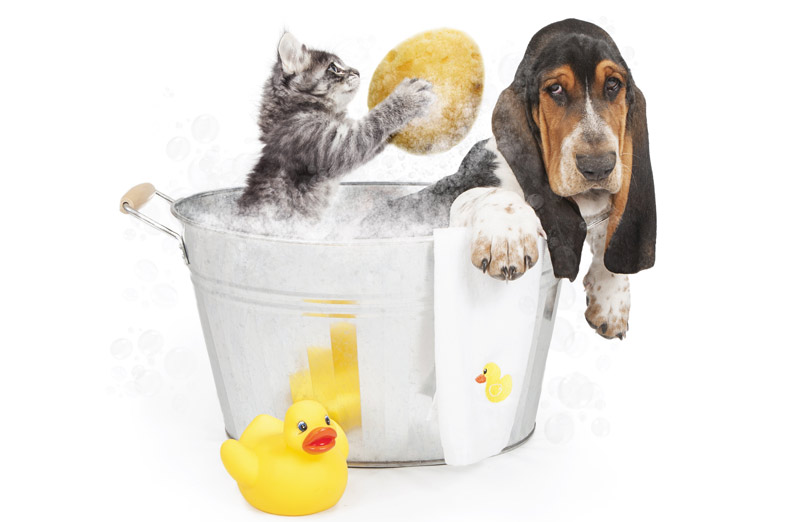 puppy-kitten-grooming.jpg