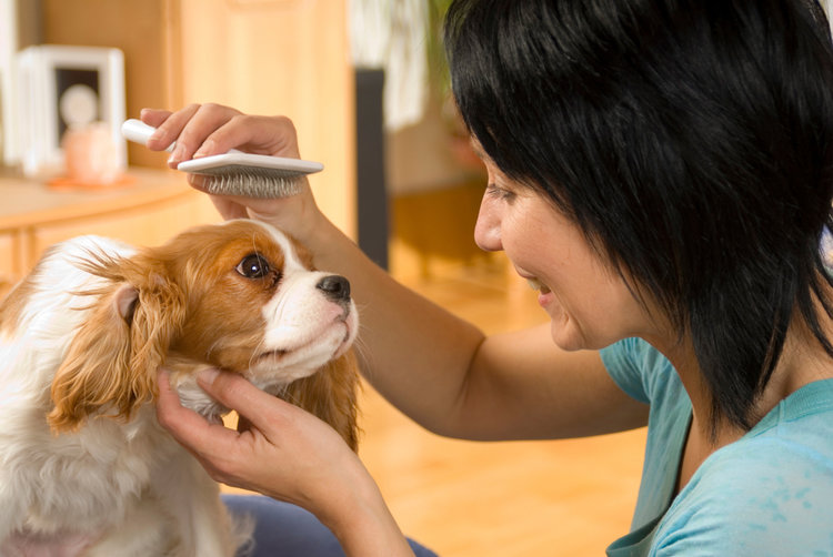 Blog the tailored groomer mobile dog and cat grooming chicago brushing dogg solutioingenieria Gallery