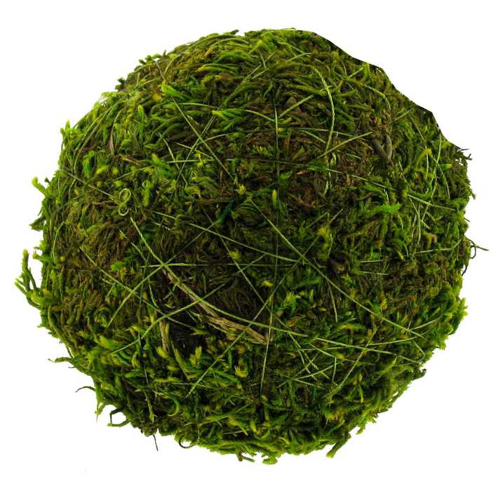 decorative moss ball- hobby lobby