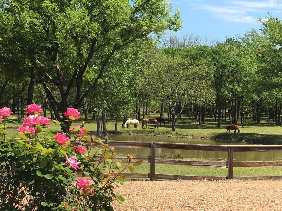 Rendola Equine Ranch