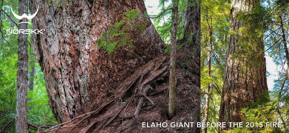 elaho-giant-before-fire.jpg
