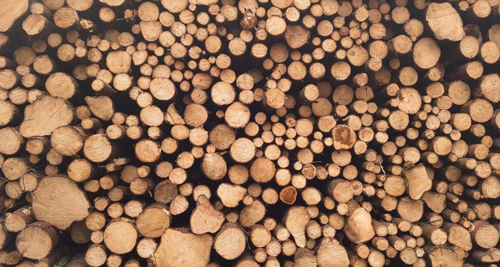 18. Harvest Timber -