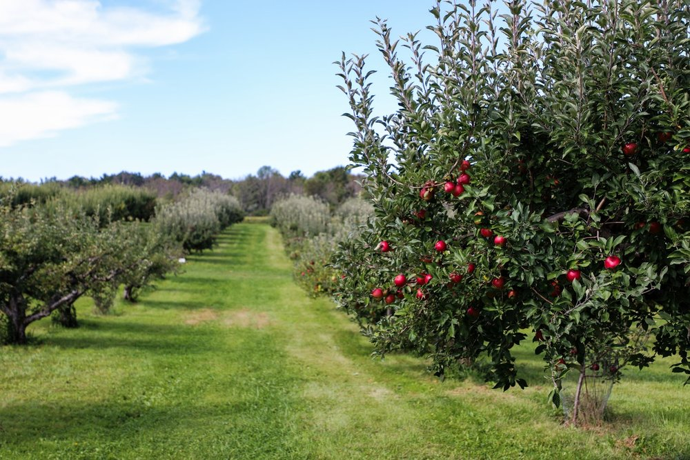 34. Orchards -