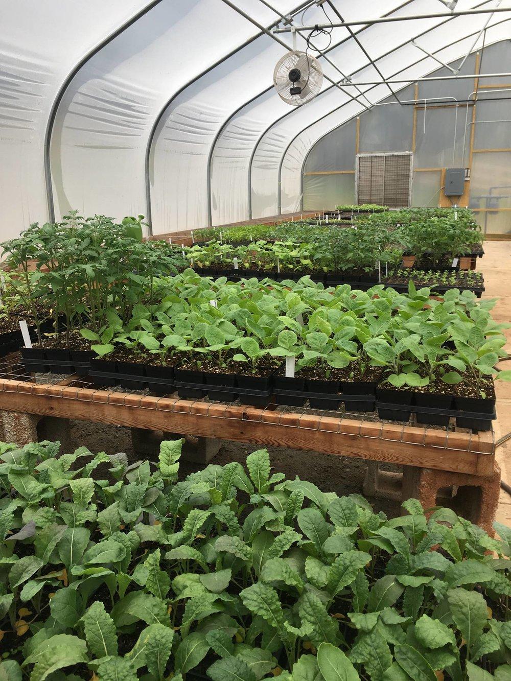 Plant Sale .jpg