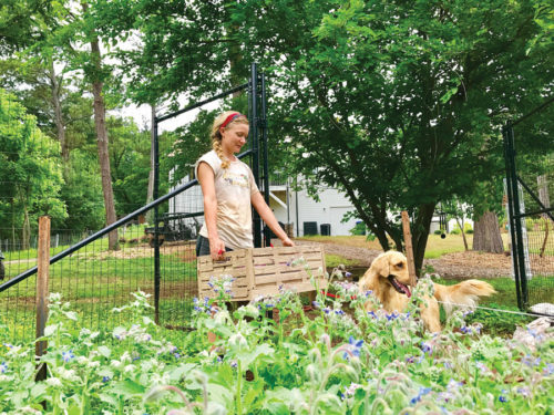 Erica Coady, of Martin's Garden in Roswell, at work in the fields with a little help from a friend.