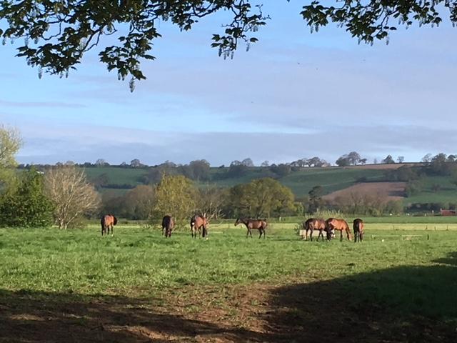 Horses in the sunshine.JPG