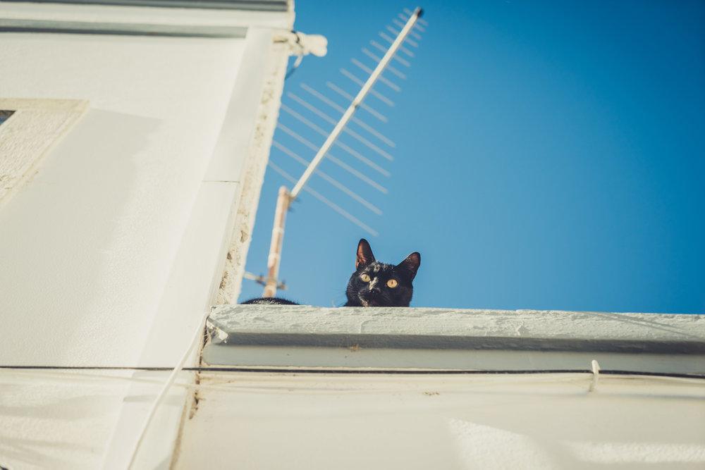 Stalking cat on the roof. Cat in Faro. Cat in The Algarve.jpg
