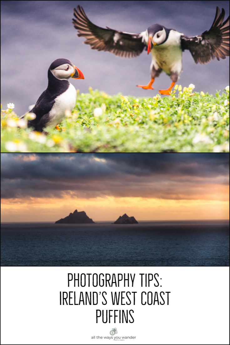 Photographing Puffins on Skellig Michael.jpg
