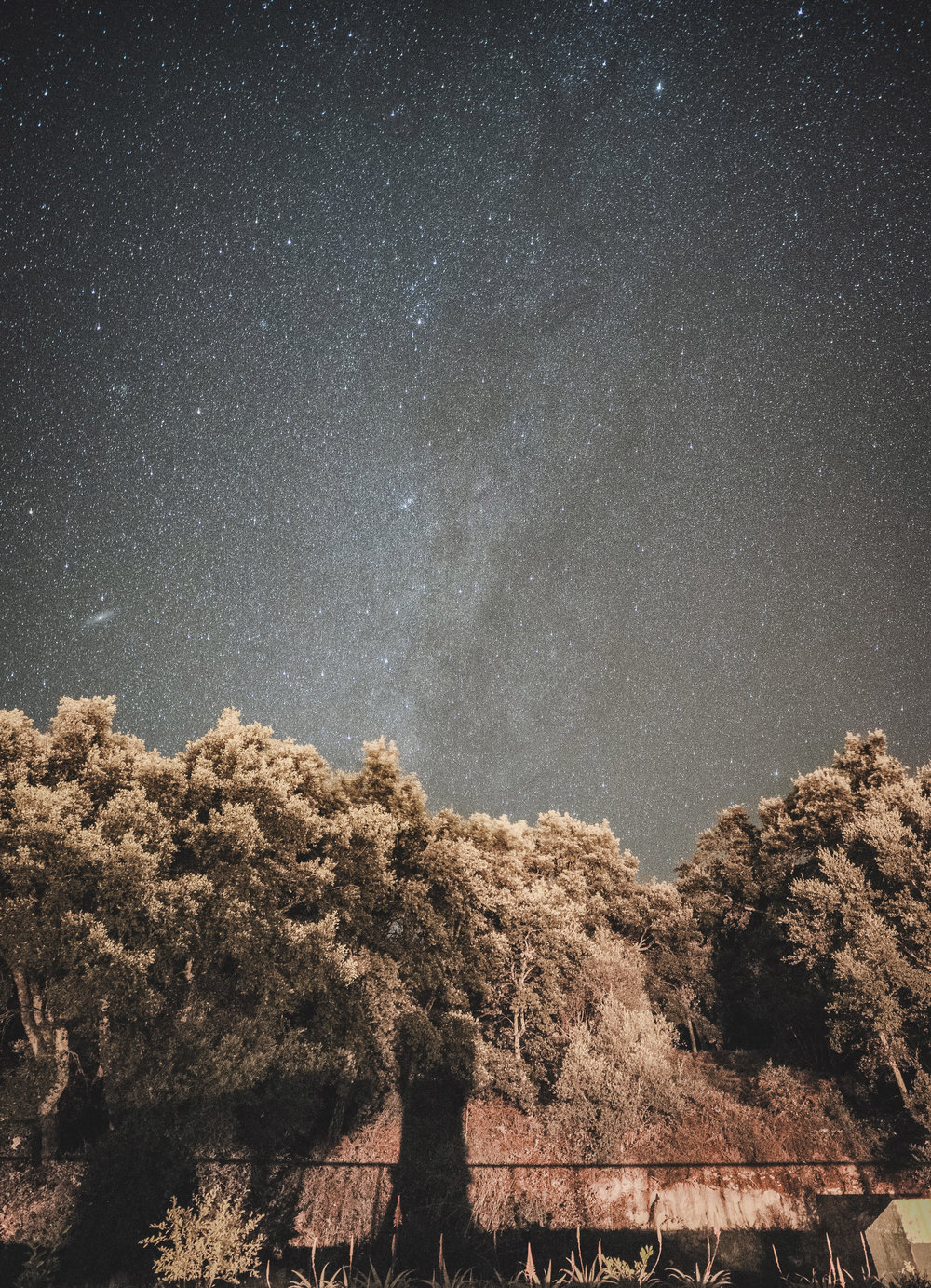 monchique portugal astrophotography. stars. milkyway. great view of the stars. tress and stars.jpg