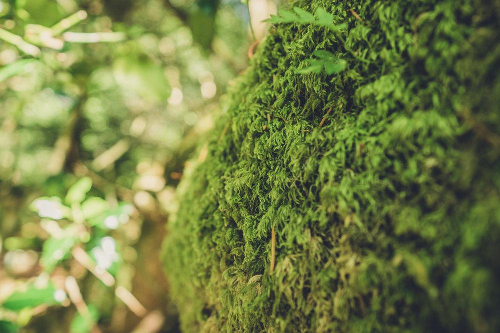 Vale of Clara. Walking in Wicklow. The garden of Ireland. Wicklow. Clara Vale. Ferns. Ireland. trees. photography. sunlight. moss.jpg