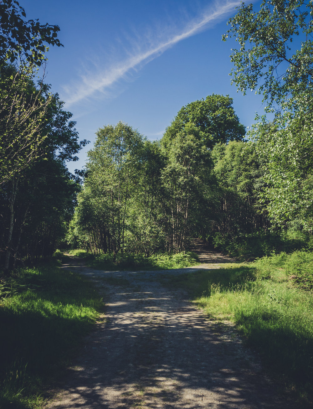 Vale of Clara. Walking in Wicklow. The garden of Ireland. Wicklow. Clara Vale. Ferns. Ireland. trees. photography. sunlight. path. two paths.jpg