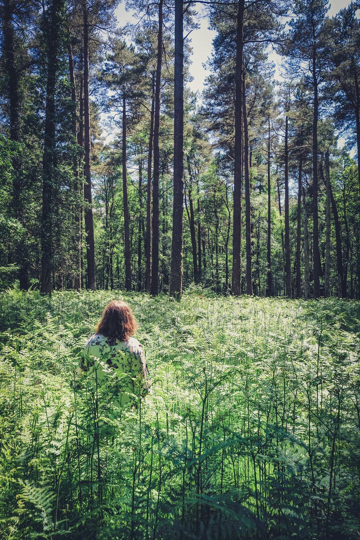 Vale of Clara. Walking in Wicklow. The garden of Ireland. Wicklow. Clara Vale. Ferns. Ireland..jpg