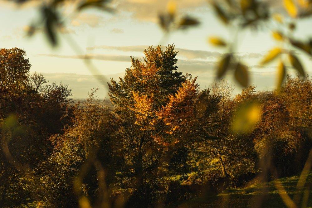 Hill of tara. ireland. history. irish. golden light. travel. blog. autumn. colour. celtic. gaelic. golden tree. looking through.jpg