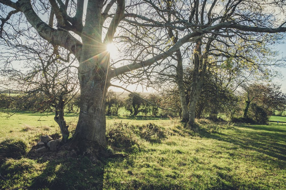 Hill of tara. ireland. history. irish. golden light. travel. blog. autumn. colour. celtic. gaelic. sunlight through the trees.jpg