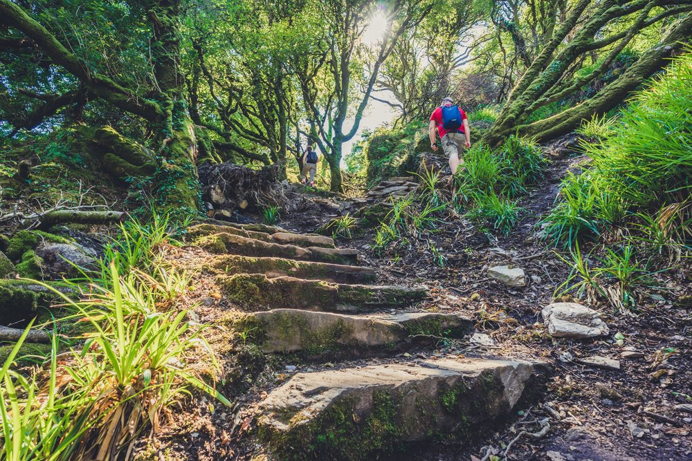 county cork. cork. ireland. irish. history. city. house sitting. old. travel. travel photography. travel photographer. lough hyne. hiking. outdoor. adventure. hiking. the stairs up.jpg
